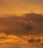 Bird flying in the sunset light